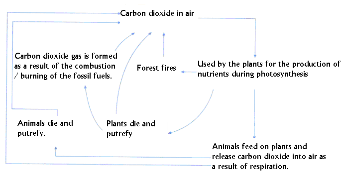 A Schematic Representation Of The Carbon Cycle Is Presented Below Lets Answer Questions After Studying Figure